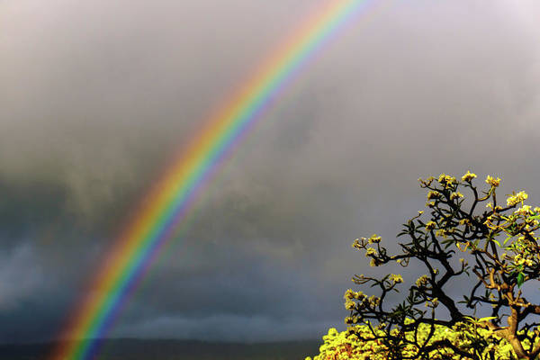 Photograph - Rainbow And Plumeria by John Bauer