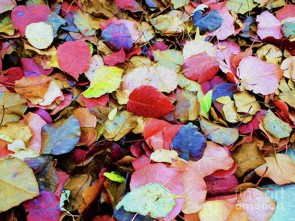 Photograph - Rainbow Autumn Leaves Painterly by Andee Design