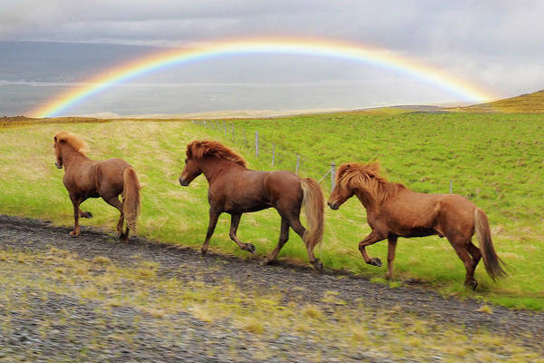 Photograph - Rainbow Horses by Marla Craven