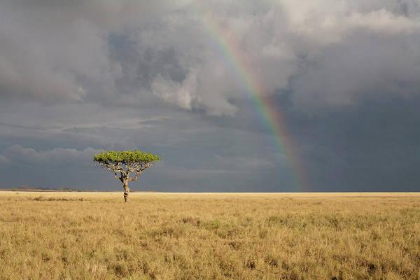 Savannah Photograph - Rainbow Over The Savannah by Alatom