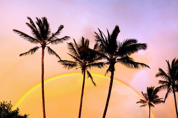 Rainbow Photograph - Rainbow Palms by Sean Davey