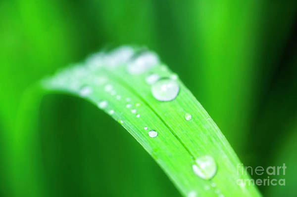 Photograph - Raindrops by Scott Kemper
