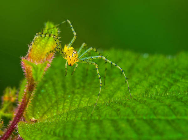 Wall Art - Photograph - Rainforest Spider, Ecuador by Michael Lustbader