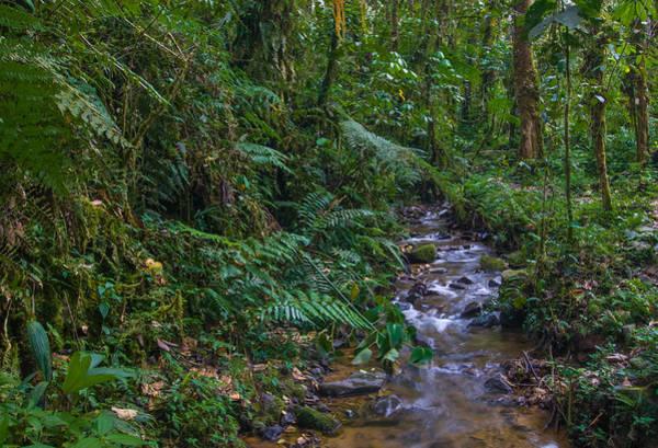Wall Art - Photograph - Rainforest Stream, Ecuador by Michael Lustbader