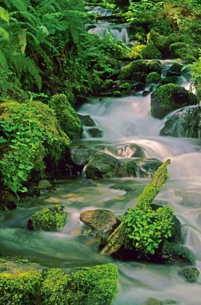 Wall Art - Photograph - Rainforest Stream by Ellen&richard Thane