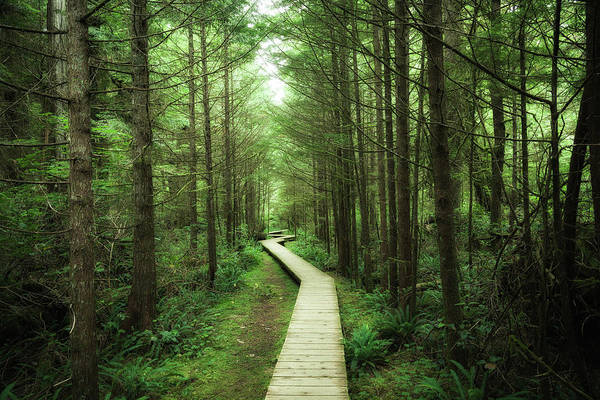 Vancouver Island Photograph - Rainforest Vancouver Island by Guillaume Vigoureux