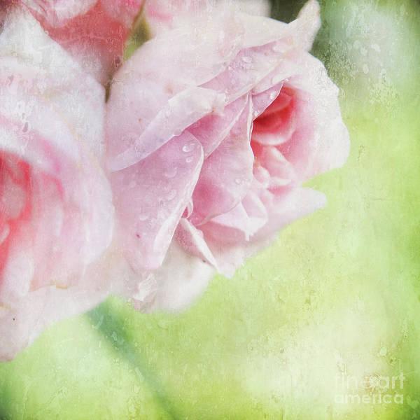 Wall Art - Photograph - Rainy Rose by Flo Photography