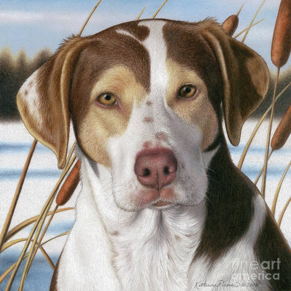 Pet Portrait Drawing - Raley by Katherine Plumer
