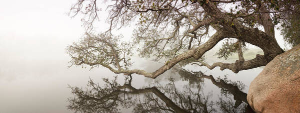 Wall Art - Photograph - Ramona Grasslands Tree And Pond by William Dunigan