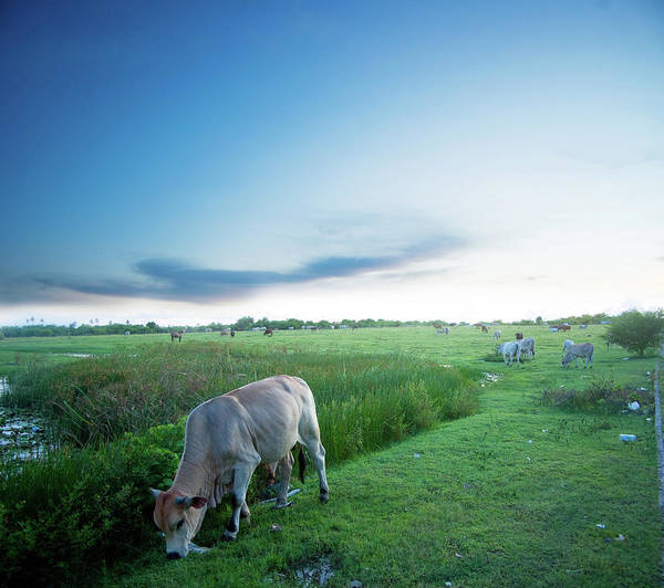Ranch Photograph - Ranch With Cows At Sunset by Jaminwell