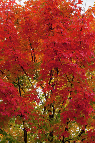 Season Photograph - Range Of Autumn Or Fall Colors In Tree by Jeff Hunter