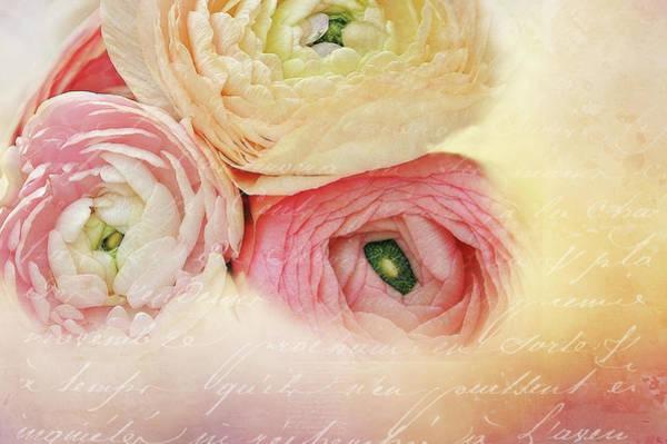 Wall Art - Digital Art - Ranunculus And Letter by Terry Davis