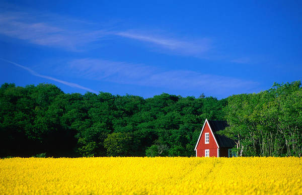 Skane Photograph - Rape Field, Red House And Forest by Anders Blomqvist