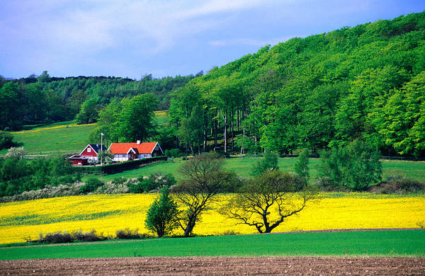 Skane Photograph - Rape Fields And Forests Surrounding by Anders Blomqvist