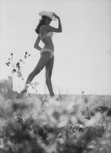 Bikini Photograph - Raquel Welch by Time Life Pictures