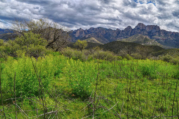 Photograph - Rare Arizona Lushness  by Chance Kafka