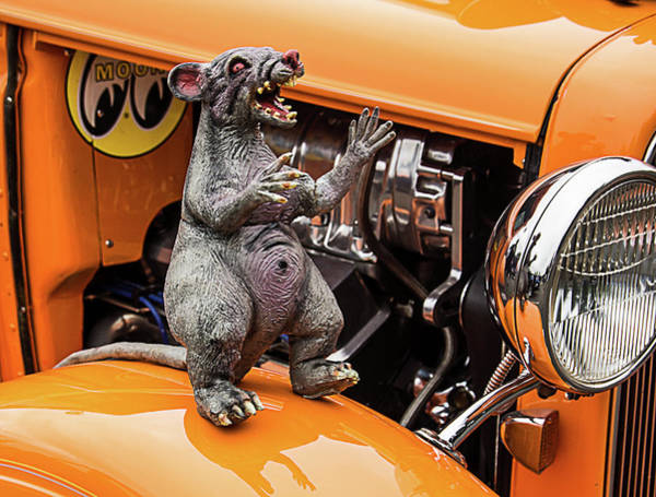 Photograph - Rat On Fender by Ron Roberts