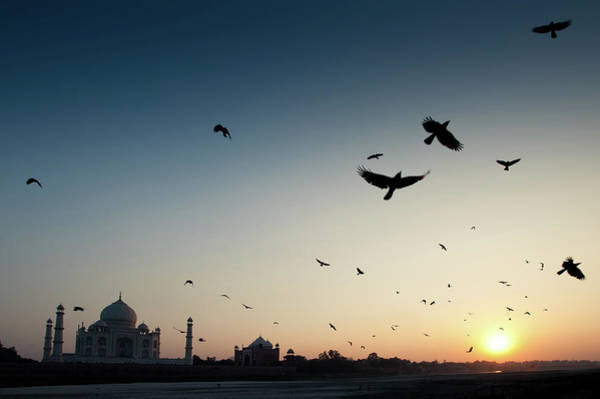 Animal Place Wall Art - Photograph - Raven Birds Flying Over Yamuna River At by © Kristian Leven