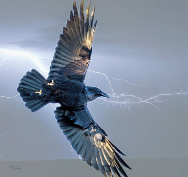 Digital Art - Raven In Lightning Storm by Judi Dressler