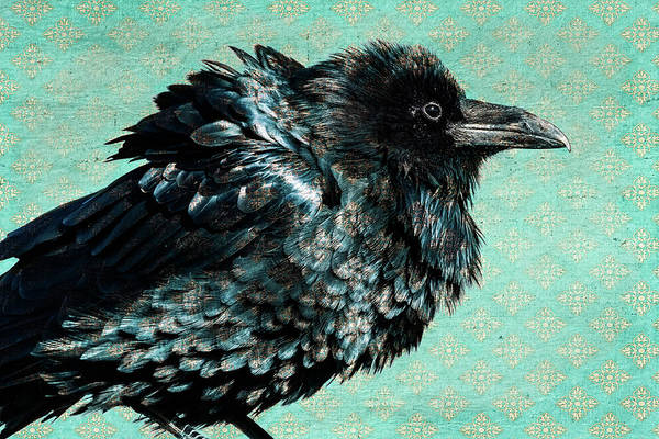 Photograph - Raven Maven by Mary Hone