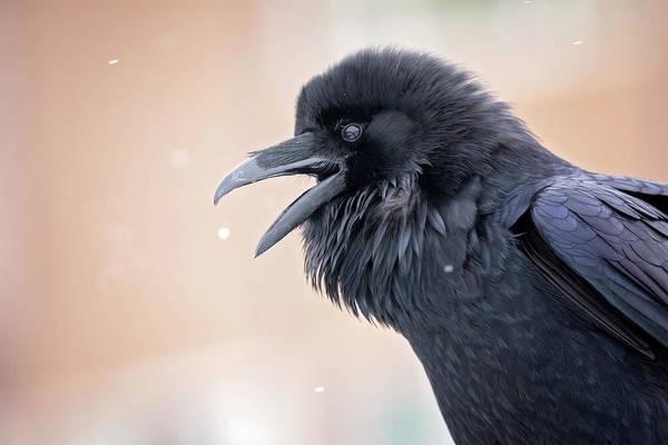 Photograph - Raven Talk by Eilish Palmer