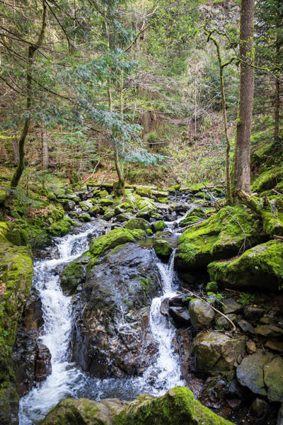 Wall Art - Photograph - Ravenna Gorge Black Forest by Teresa Mucha