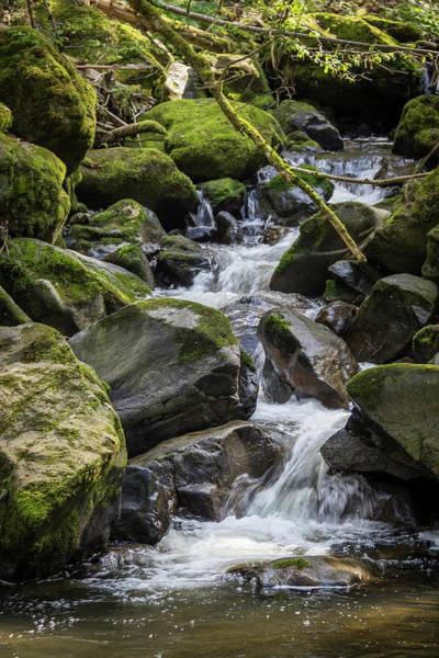 Wall Art - Photograph - Ravenna Stream by Teresa Mucha