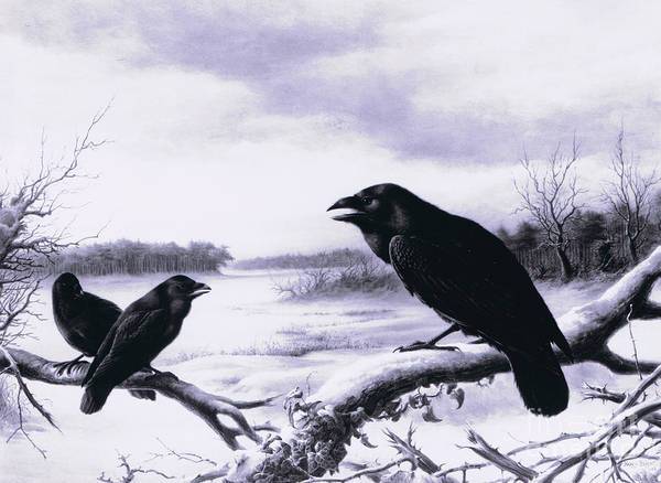 Wall Art - Painting - Ravens In Winter by Harry Bright