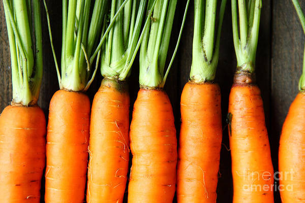Raw Wall Art - Photograph - Raw Fresh Carrots With Tails, Top View by Olha Afanasieva