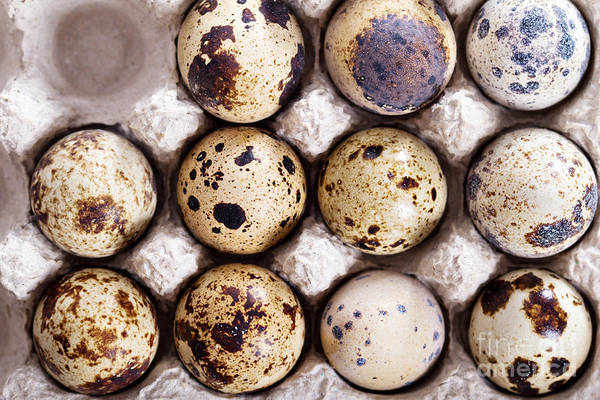 Wall Art - Photograph - Raw Quail Eggs In Egg Holder From Above by Elena Veselova