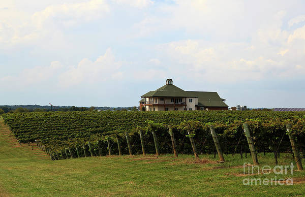 Photograph - Raylen Vineyards And Winery In Mocksville North Carolina by Jill Lang