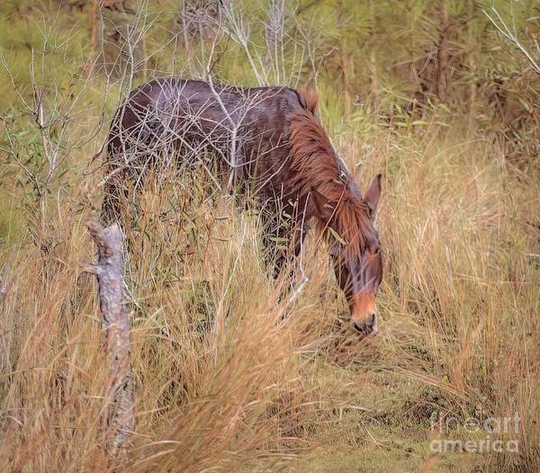 Hillside Wall Art - Digital Art - Raymond The Corolla Wild Donkey by Elijah Knight