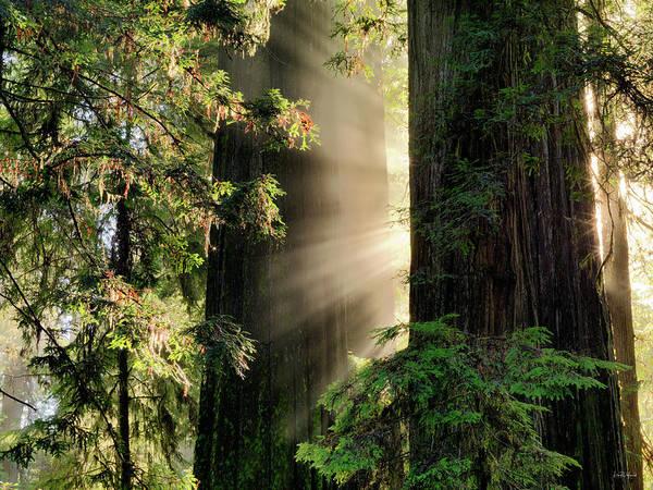 Wall Art - Photograph - Rays Of Light by Leland D Howard