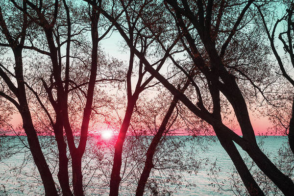 Photograph - Razzle Dazzle Pink And Mint Sunrise Through Willow Lace by Georgia Mizuleva
