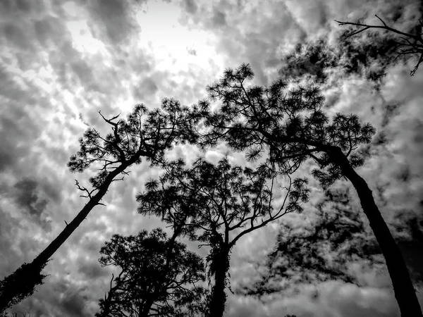 Photograph - Reach For The Sky by Robert Stanhope