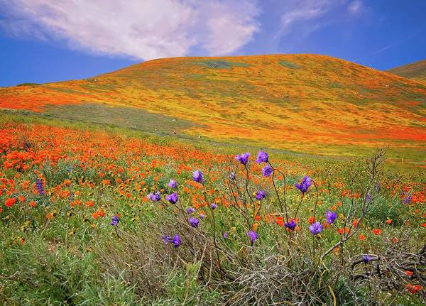 Photograph - Reaching For The Sky - Superbloom 2019 by Lynn Bauer