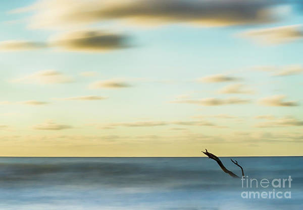 Wall Art - Photograph - Reaching Out by DiFigiano Photography