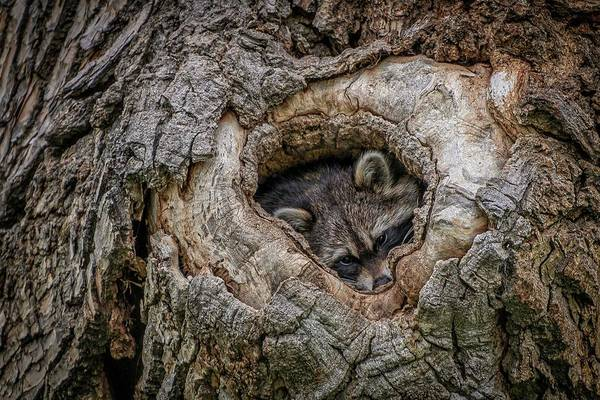 Colorado Wildlife Wall Art - Photograph - Ready For Nightfall by Christopher Thomas