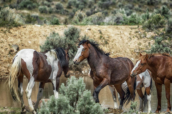 Photograph - Ready To Play by Belinda Greb
