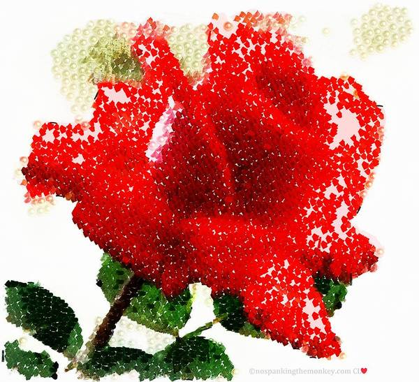 Digital Art - Real Rose by Catherine Lott