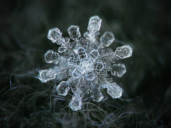 Photograph - Real Snowflake - 04-feb-2018 - 1 by Alexey Kljatov
