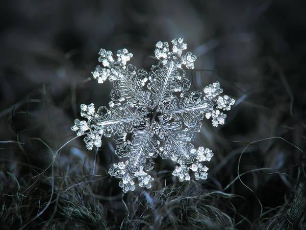 Photograph - Real Snowflake - 26-dec-2018 - 1 by Alexey Kljatov