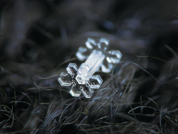 Photograph - Real Snowflake - 27-jan-2019 - 1 by Alexey Kljatov