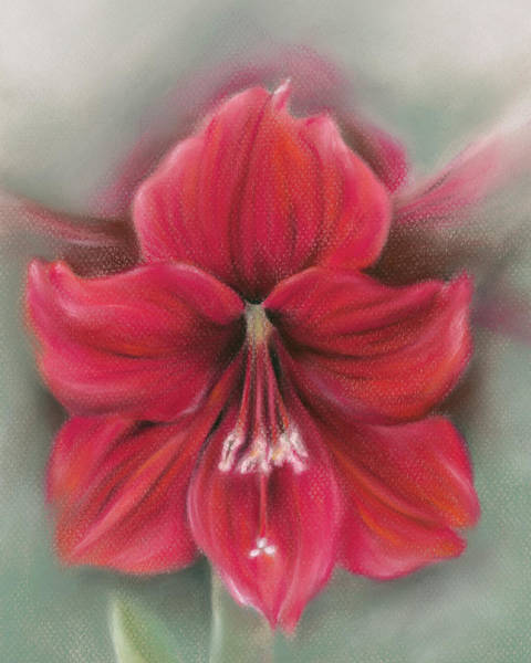 Pastel - Red Amaryllis by MM Anderson
