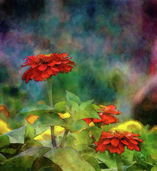 Photograph - Red And Orange Zinnias 1297 Idp_2 by Steven Ward