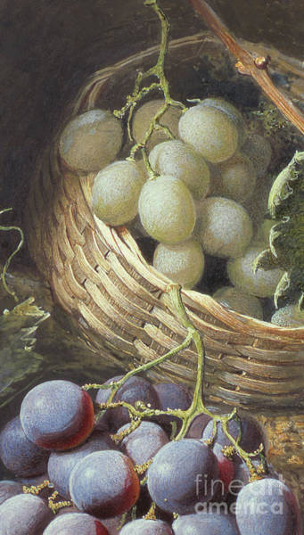 Wall Art - Painting - Red And White Grapes by Frederick Thomas Baynes