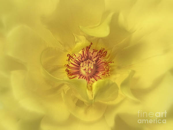 Botanica Photograph - Red And Yellow Home Decor by Ella Kaye Dickey