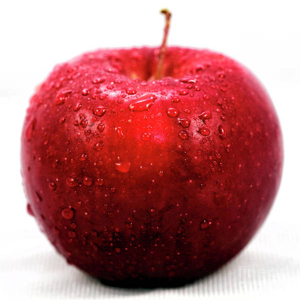 Macintosh Apple Photograph - Red Apple Portrait by John Rizzuto