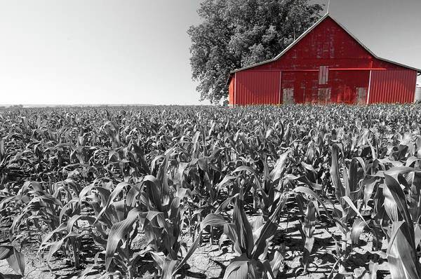 Photograph - Red Barn And Corn by Steve Stuller