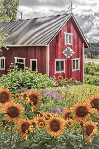 Photograph - Red Barn In Summer Country Sunflowers by Debra and Dave Vanderlaan